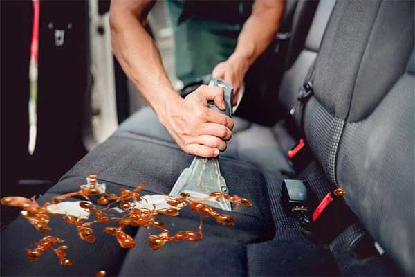 How To Get Rid Of Ants In a Car - Best Tips - You Never Heard Before.
